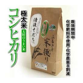 【30年産】【鳥取県産米】極太米「コシヒカリ」【清流そだち】(5kg)[送料無料][常温]