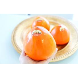 【数量限定】1玉約550gにもなる特大玉の富士柿。キズが少なく美しい特選品!贈り物やご挨拶に。