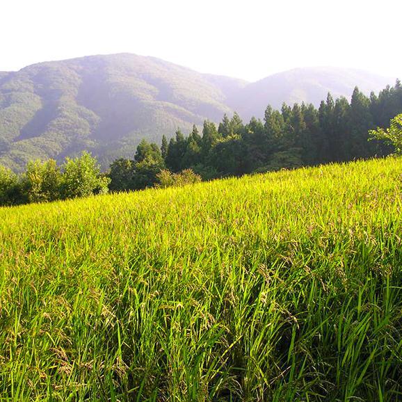 黒米甘酒(福島県田村市滝根町産の無農薬・無化学肥料栽培米100%使用)05