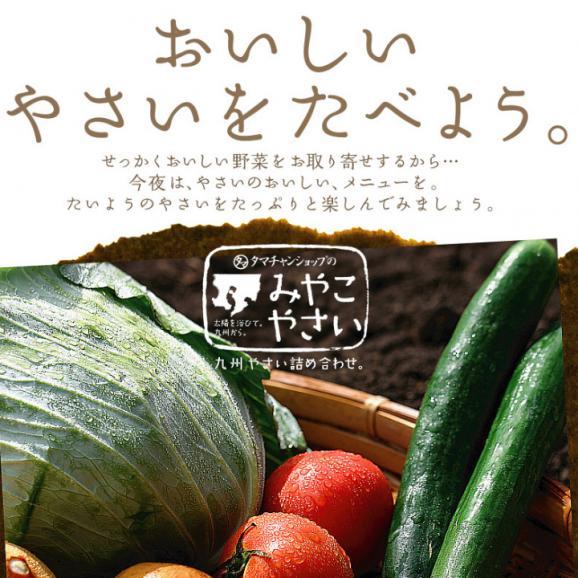 九州野菜ミニミニお試しセット 【送料無料】02