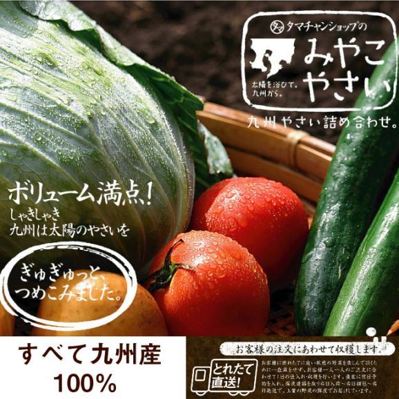 九州野菜ミニミニお試しセット 【送料無料】06