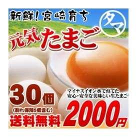 【送料無料】 宮崎育ち のこだわり たまご !こだわりの飼料と マイナスイオン水 で育てた濃厚な味わい