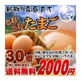 霧島山麓たまご 【九州 たまご】 3パック(30個) 【送料無料】