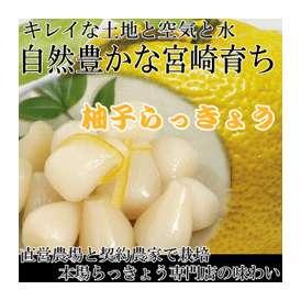 霧島ブランドの『柚子らっきょう』