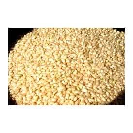 国産玄米の真の実力!発芽玄米5000g(宮崎産)量もたっぷり!