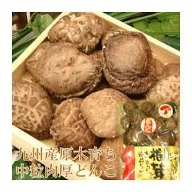 こころ温まる椎茸ギフト 椎茸市場だからこそ出来る高品質&低価格 九州産乾し中粒どんこ110g 2年の歳月をかけた本物の味をお届け致します!