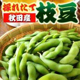 【TVで紹介されたあの人気店の味!】[注文殺到中]ぷりぷり美味しい秋田県産枝豆