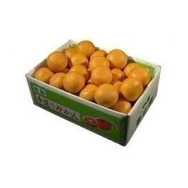 栗山園の清見オレンジMサイズ5kg【送料無料(北海道、沖縄は500円)】