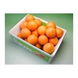 栗山園のネーブルオレンジ5kg 【送料無料(北海道、沖縄は1000円)】