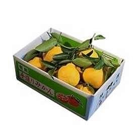 栗山園の葉付き三宝柑3kg【送料無料(北海道、沖縄は1000円)】