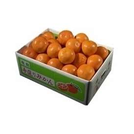 栗山園のセミノールオレンジMサイズ5kg【送料無料(北海道、沖縄は1000円)】