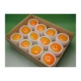 かつらぎの 刀根早生柿サイズお任せ10~15個約2.4~2.8kg