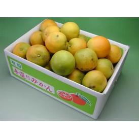 栗山園の国産バレンシアオレンジご家庭用 5kg【送料無料(沖縄は1000円)】
