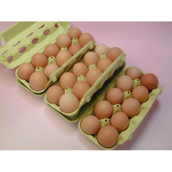 ポロニ養鶏場の元気な卵 30個入り箱02