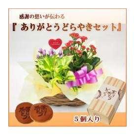 季節の花鉢と「ありがとうどらやき」のセット