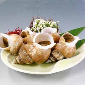 茹でバイ貝 700g(7~10個)山陰産