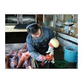 冷凍 活上げ タコ生卵 3kg 送料無料