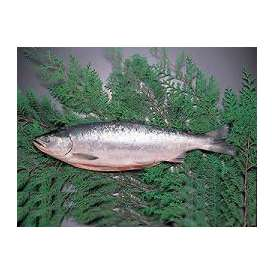 冷凍生紅鮭1本- 3kg前後【送料無料】