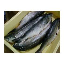 甘塩紅鮭少々キズ有1本-1.8kg前後