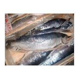 沖塩紅鮭(少々キズ有)1本-2kg以上【送料無料】