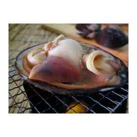 活天然ホッキ貝、北寄貝300g以上-5個(特大)【送料無料】