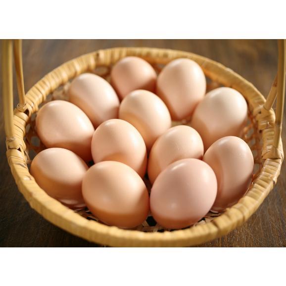 平飼い無添加飼料で育む烏骨鶏の有精卵【20個】01
