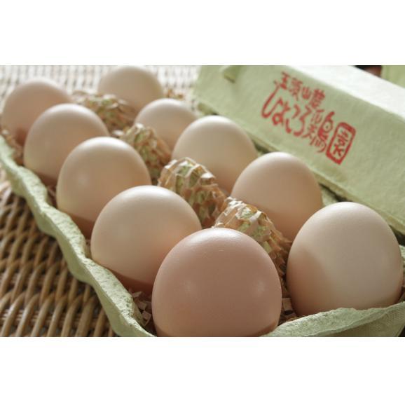 平飼い無添加飼料で育む烏骨鶏の有精卵【20個】03