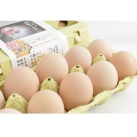 平飼い無添加飼料で育むにいがた地鶏の有精卵20個入