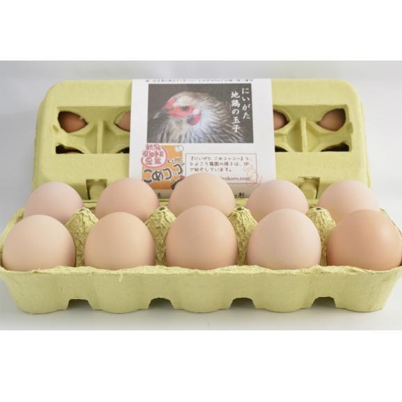 平飼い無添加飼料で育むにいがた地鶏の有精卵20個入02