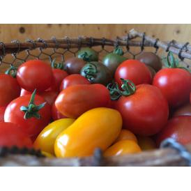 彩り有機ミニトマトの詰め合わせ1.5kg