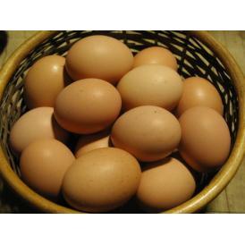 平飼い鶏の有精卵「ぽんあびらん」 30個セット