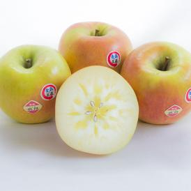 ぐんま名月 林檎 りんご リンゴ
