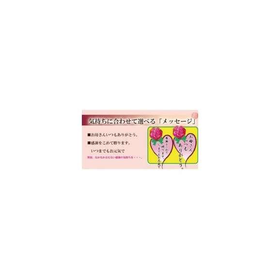 母の日特別ギフト 私の気持ちカーネーションキャンディーセット【送料無料】02