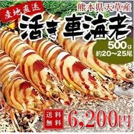 車海老【送料無料】 熊本県天草産活き車海老 【500g/約20〜25尾】