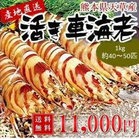 車海老【送料無料】 熊本県天草産活き車海老 【1kg約40〜50尾】