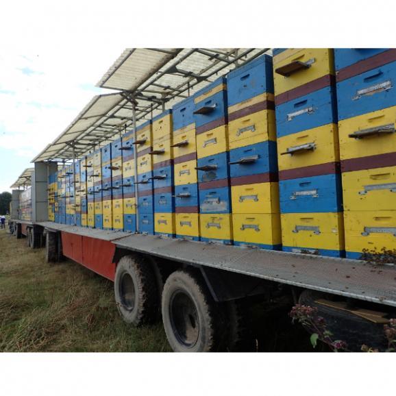 キルギスのハチミツ Mサイズ 三種類セット03