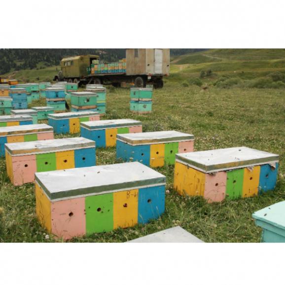 キルギスのハチミツ Mサイズ 三種類セット04