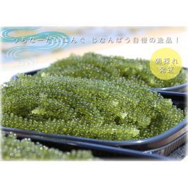 沖縄産生海ぶどう800g