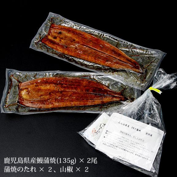 鹿児島県産 うなぎ蒲焼(長焼) 2尾 (135gx2) 送料無料 お中元/ギフト03