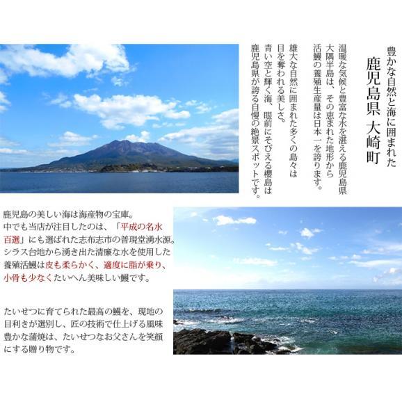 鹿児島県産 うなぎ蒲焼(長焼) 2尾 (135gx2) 送料無料 お中元/ギフト06