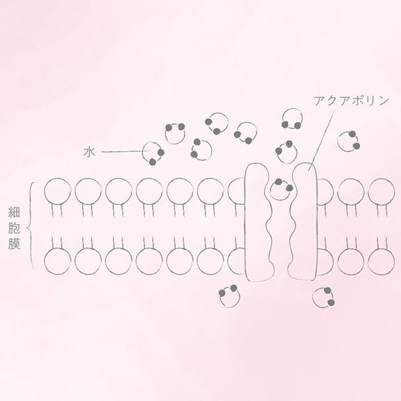 プラズマ解離水【500ml × 24本】03
