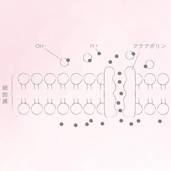 プラズマ解離水【500ml × 24本】04