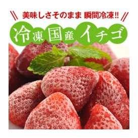 [冷凍フルーツ]国産イチゴ500g 20個まで1配送でお届け クール便[冷凍]にてお届け