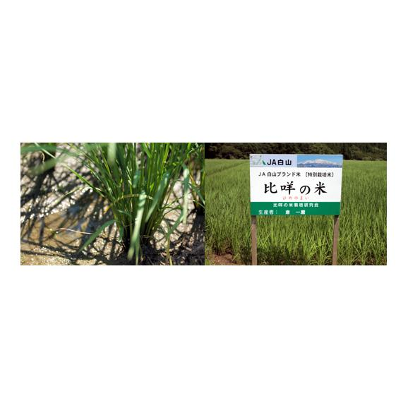 【送料込】特別栽培米コシヒカリ ひめの米・玄米2kg 【地域名産ギフト】【ご当地グルメ】【お中元・ご贈答に】05