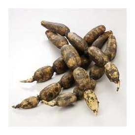 【送料込】有機肥料で作った蓮根「加賀れんこん」5kg・冷蔵便【地域名産ギフト】【ご当地グルメ】【お中元・ご贈答に】