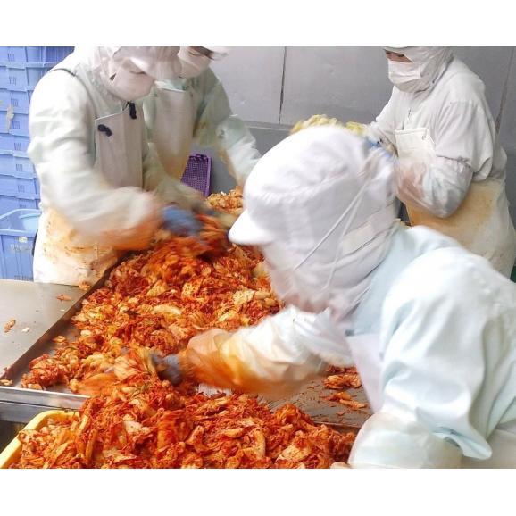 乳酸発酵キムチ2種【計10個セット】05