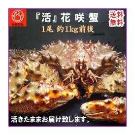 送料無料 活 花咲ガニ 1尾 1kg かに/カニ/蟹/ハナサキ/花咲/お取り寄せ/