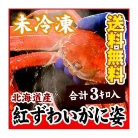 北海道産紅ずわいかに姿大量3キロ(5~8尾入)【送料無料】(紅ズワイ)