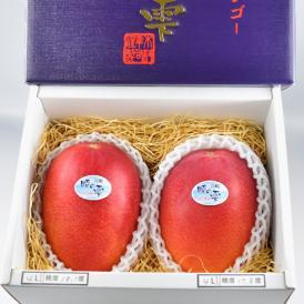 きむら農園「時の雫《極み》」マンゴー 2玉化粧箱入り 4L