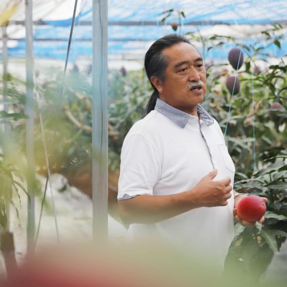 KIMURA FARM「時の雫《極み》」マンゴー 2玉化粧箱入り 4L04